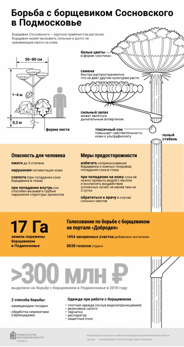 инфографика борьба с борщевиком