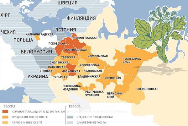 карта распространения борщевика