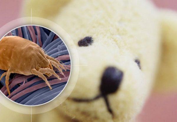 пылевой клещ на мягкой игрушке