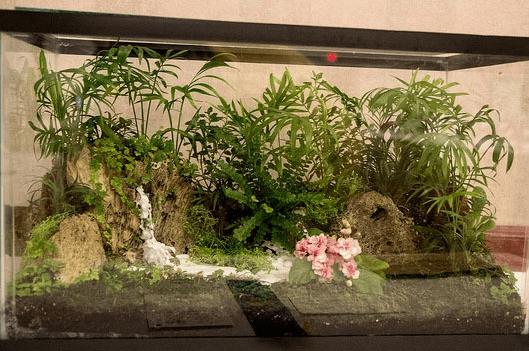 Флорариум в ёмкости для аквариума