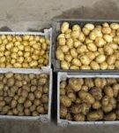 Как сортировать картофель после копки