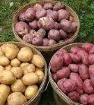 Как сортировать картошку