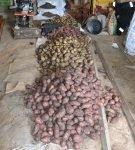 Хранение картофеля насыпью