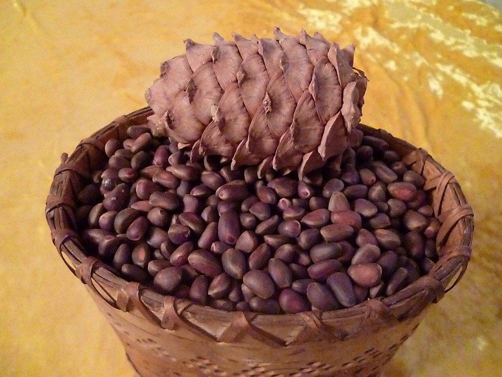 Как сделать мельницу для кедрового ореха своими руками