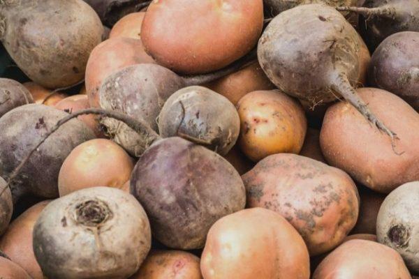 Хранение свёклы с картофелем