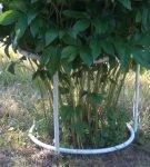 Ограждение для кустарника из пластиковых труб