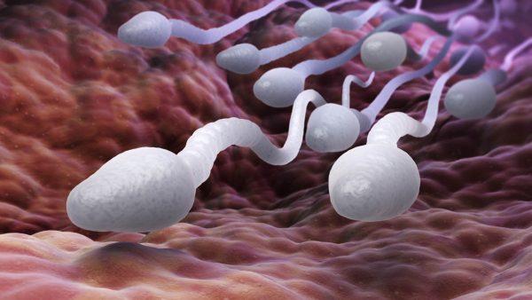 Неактивные сперматозоиды