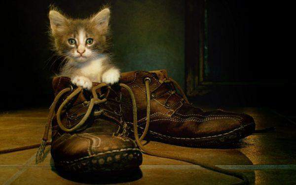 Даже хорошо воспитанные коты иногда метят обувь