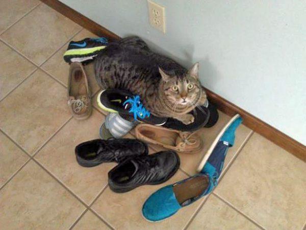 Пушистый любитель ботинок