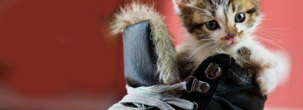 Частая причина неприятного запаха из обуви - кошачьи метки