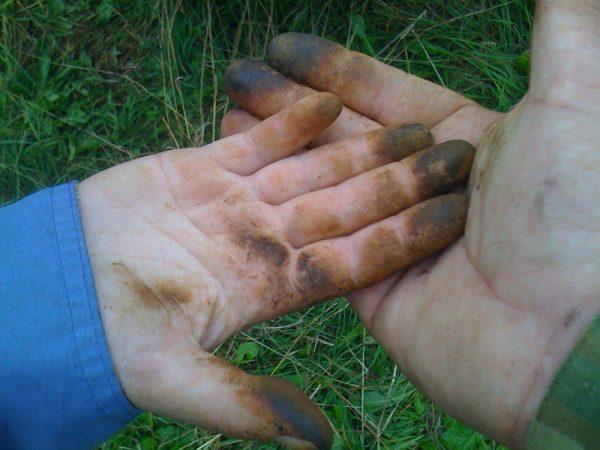 Следы от грибов маслят на руках, которые надо отмыть