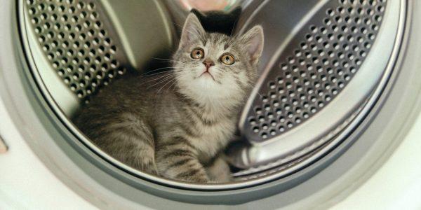 Котёнок в стиральной машине