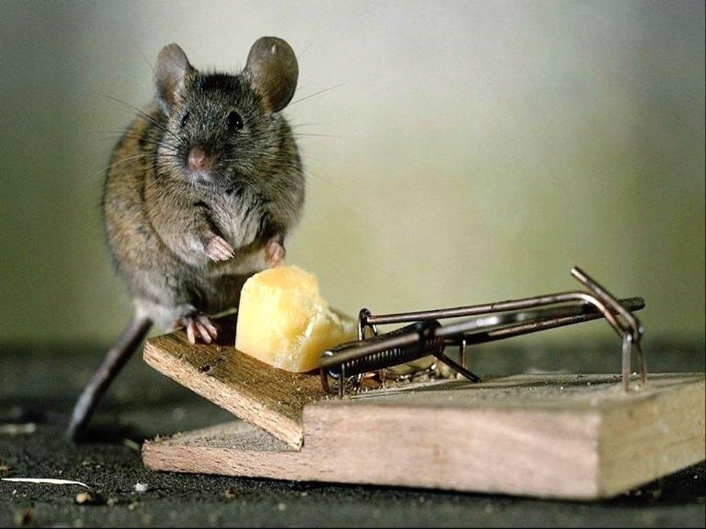 Защита от мышей на участке
