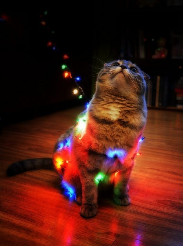 кот и новогодняя гирлянда
