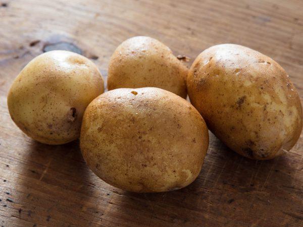 Свежий картофель с высоким содержанием крахмала
