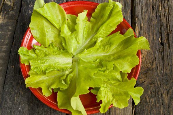 Листовой салат на большой красной тарелке