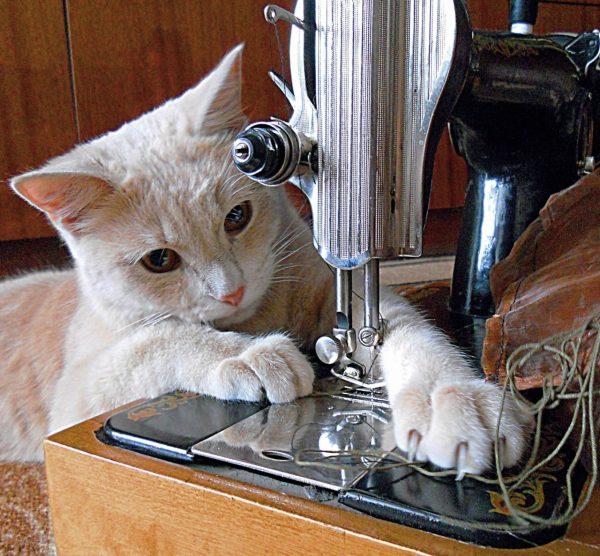 Швейная машинка и кот