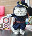 Костюм «Полицейский»