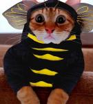 Костюм «Пчела»