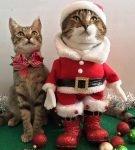 Кот в костюме и без