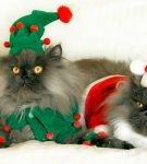 Коты в разных костюмах