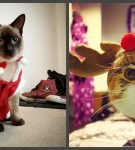 Коты в костюмчиках