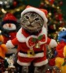 Кот среди игрушек