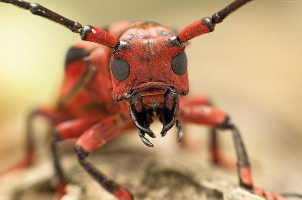 Рабочая особь муравья крупным планом