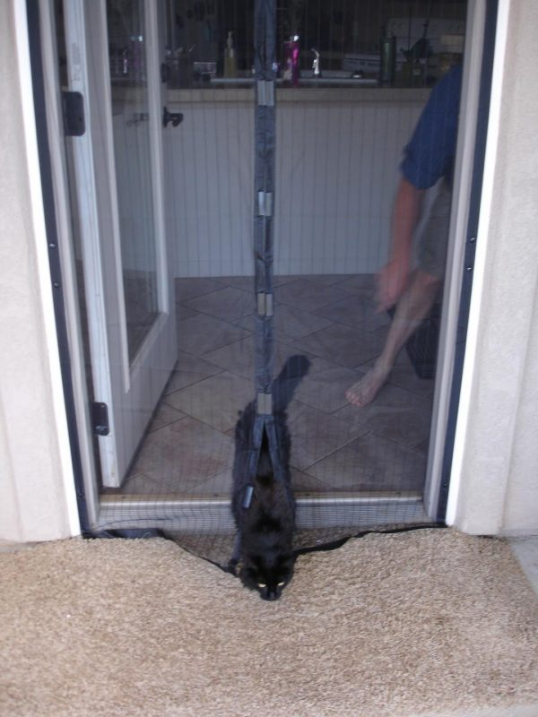 Кошка проходит через магнитную москитную сетку