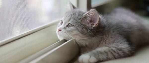 Котик смотрит на москитную сетку