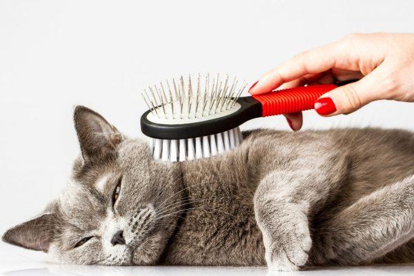 Способ обнаружить блох с помощью вычёсывания