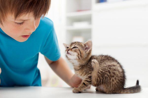 Кот с блохами и мальчик