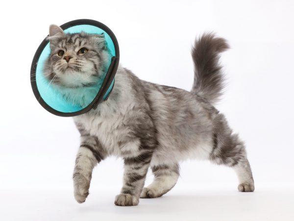 Ветеринарный воротник