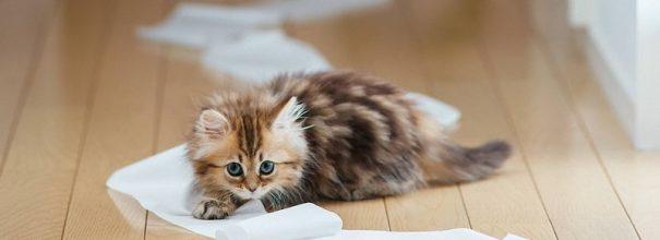 Котёнок играет с туалетной бумагой