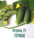 Плоды огурцов Герман