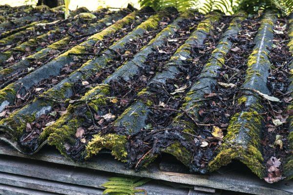 Разрушение шиферной крыши мхом