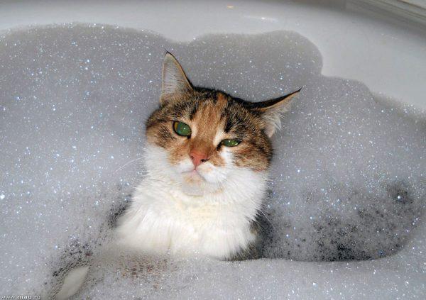Кот в пенной ванне