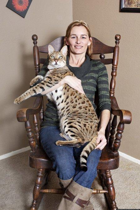 Человек и камышовый кот