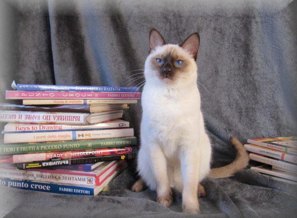 Тайский кот и книги