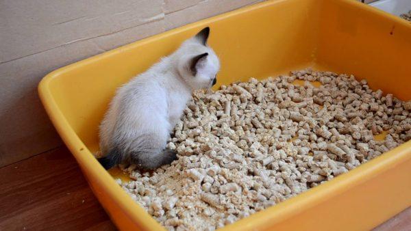 Котёнок тайской кошки в лотке