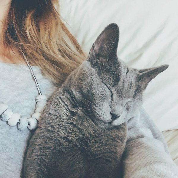 Русская голубая кошка на руках