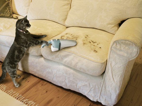 кошка с пылесосом