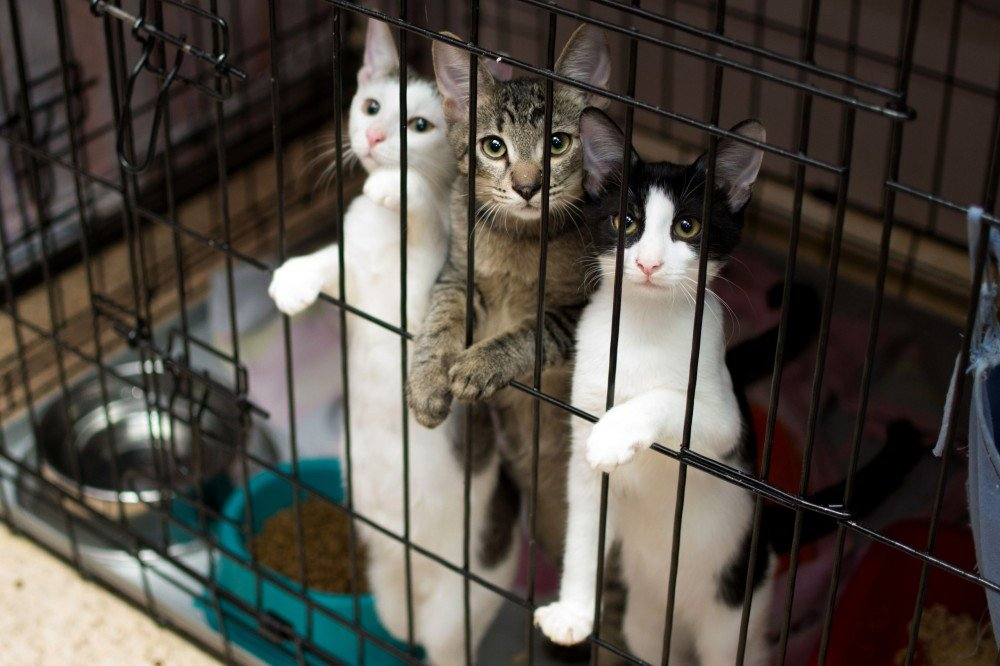пожелать приюты котят в москве с фото хотите
