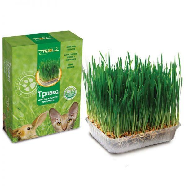 Кошачья трава