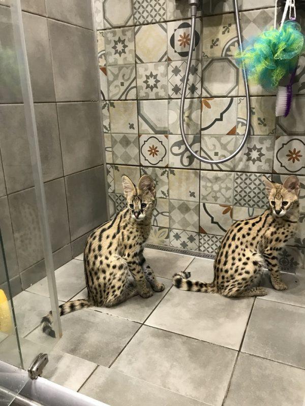 сервалы в ванной комнате
