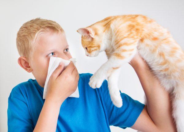 Мальчик держит кошку в руке