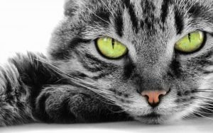 Морда серого полосатого кота с зелёными глазами