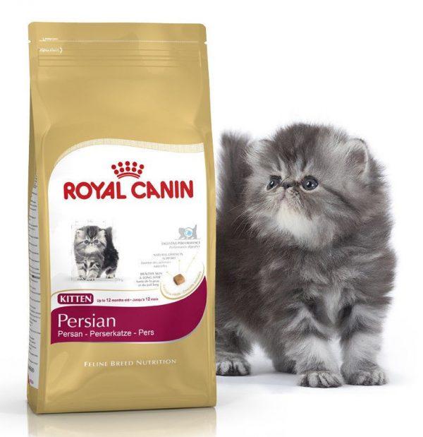 Котёнок рядом с кормом для персов