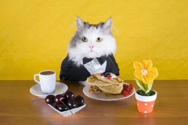 Кот в костюме за столом