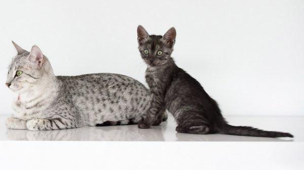 Мау с котёнком